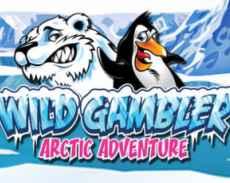 Wild Gambler Arctic