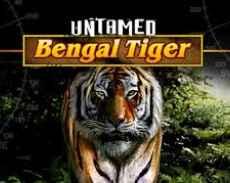 Untamed Tiger